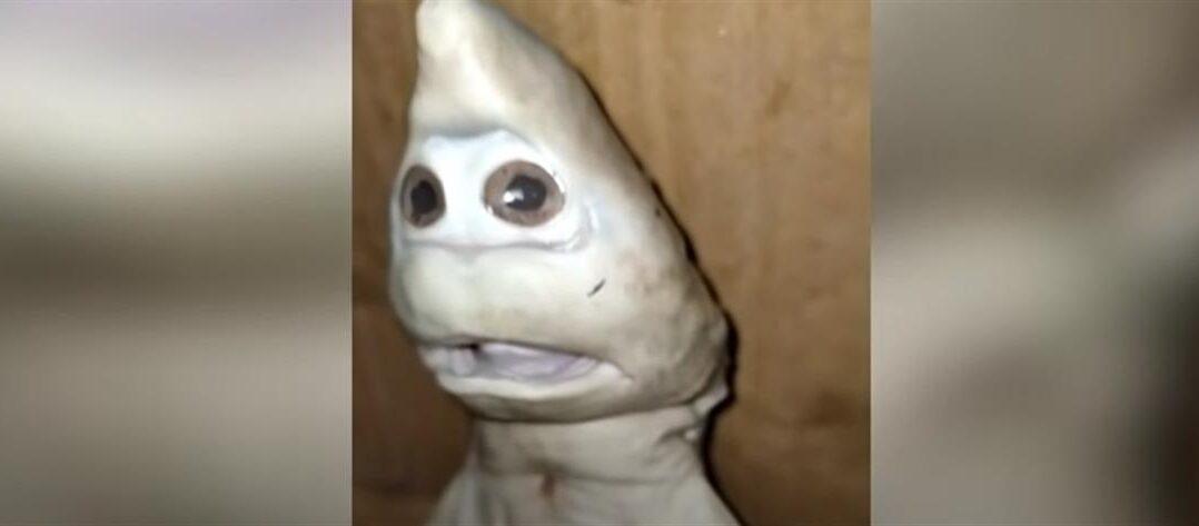 Viral μωρό καρχαρίας με ανθρώπινη μορφή!