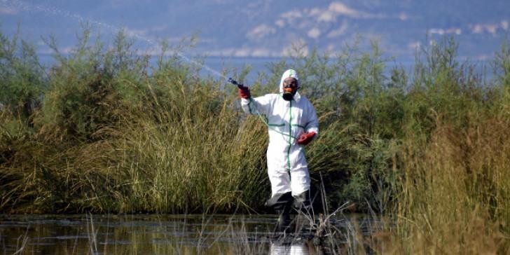 Πρόγραμμα κουνουποκτονιών στον Δήμο Ρόδου