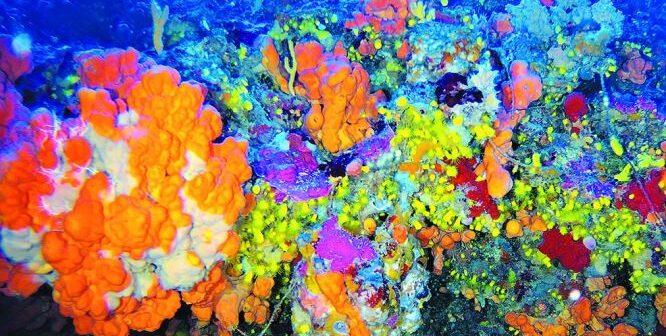 Κοράλλια ηλικίας 7.500 ετών «κρυμμένα» στο Αιγαίο
