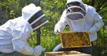 Πρόγραμμα Στήριξης των Μικρών Νησιών του Αιγαίου στον Τομέα της Μελισσοκομίας