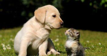 Ο Δήμος Ρόδου για την Παγκόσμια Ημέρα των Ζώων